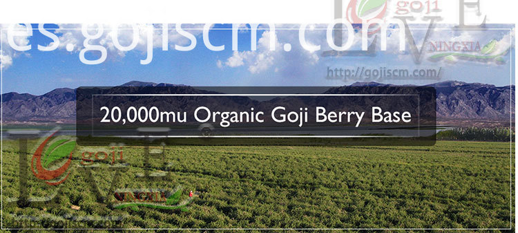 High Quality Natural Goji Berry base