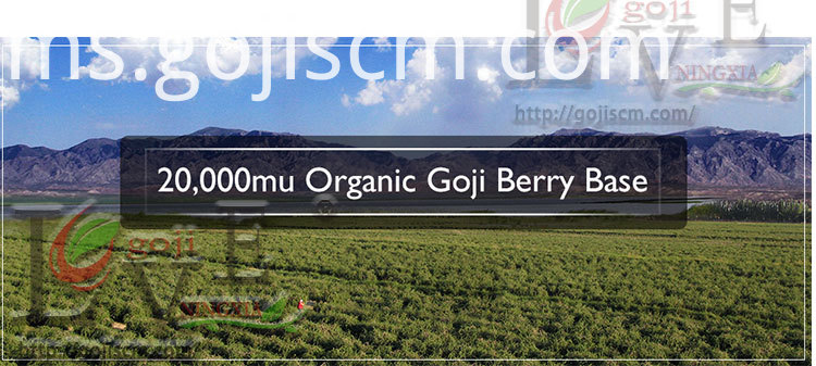 High Quality GOJI BERRY base