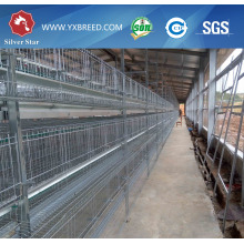Four Tiers Full Automatic Layer Cage