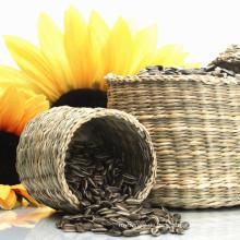 Großhandel Sonnenblumensamen günstigen Preis