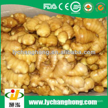 factory wholesale high quality fresh ginger with lowest price