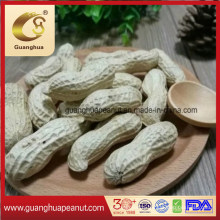 Hot Sales Factory Best Quality Peanut in Shell