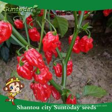 Suntoday culture de l'agriculteur sichuan mariné jalapeno F1hot poivre piment hebanero hybride légume (22021)