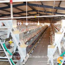 Equipamento Avícola Automático para Frangos de Corte e Camadas