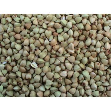 Origen de Yulin de los granos de alforfón chino (BW-007)