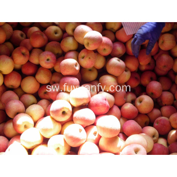 Fresh Fresh Qulality Fuji apple