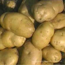 China Low Price Potato