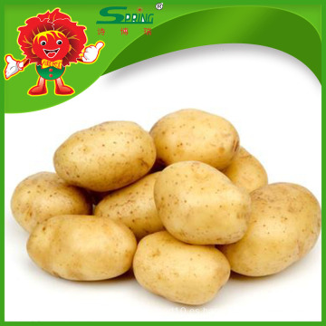 200-300g de patata de alta calidad precio fresco patata