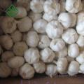Billiger chinesischer Knoblauch Pure White