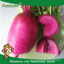 Suntoday овоща высокий Агро времени урожайность гибридных органических культивирования Ф1 красного Чери семена редька для сельского хозяйства (51001)