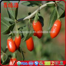 Produits de soins de santé bio goji berry prix alimentaire goji berry anti-vieillissement