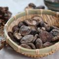 Modell - Pilz Geschmack Hot Pot Gewürze