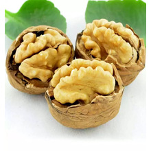 Chinese walnut in shell price