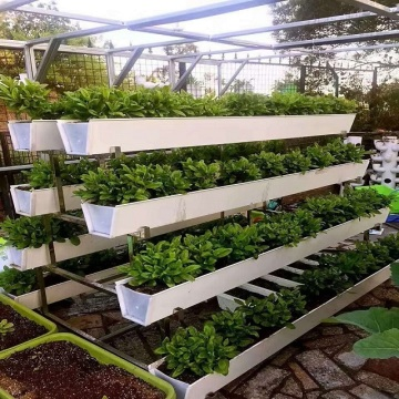 Hydroponic Fodder Strawberries Growing System