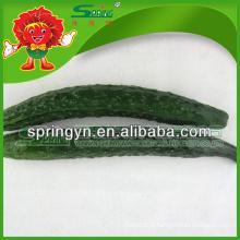 2015 HOTSALE pepino fresco orgânicos legumes verdes frutas saudáveis