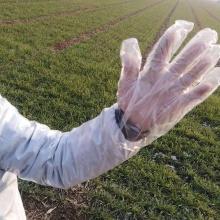 Long arm veterinary examination farm vet glove