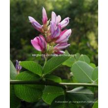 Lespedeza Capitata Extract Flavones 6% por UV (84837-05-8)