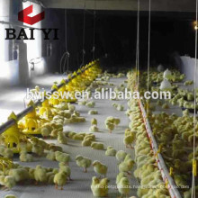 Poultry Farm Ground Raising Chicken Broiler Equipment