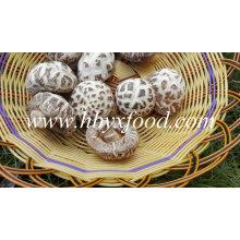 Сушеные Овощи Белый Цветок Гриб Шиитаке Ценам