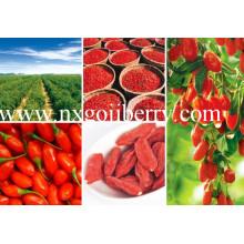 Goji Berry de China, Orgánico Goji certificado por la FDA, Super Goji Exportador