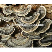 Natural Health Product food grade coriolus versicolor extract