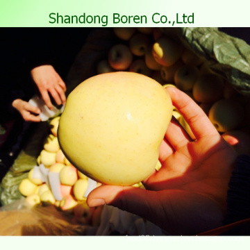 2015 Chinese Fresh Sweet Golden Delicious Apple