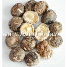 Sanligang 2.5-3.0cm Dried Smooth Shiitake Mushroom