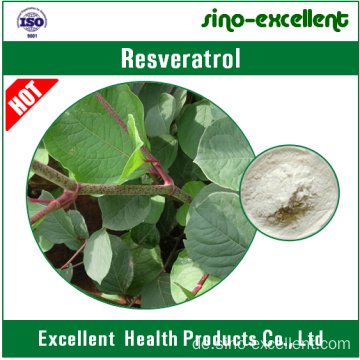 Resveratrol 98% (Giant Knotweed Extrakt)