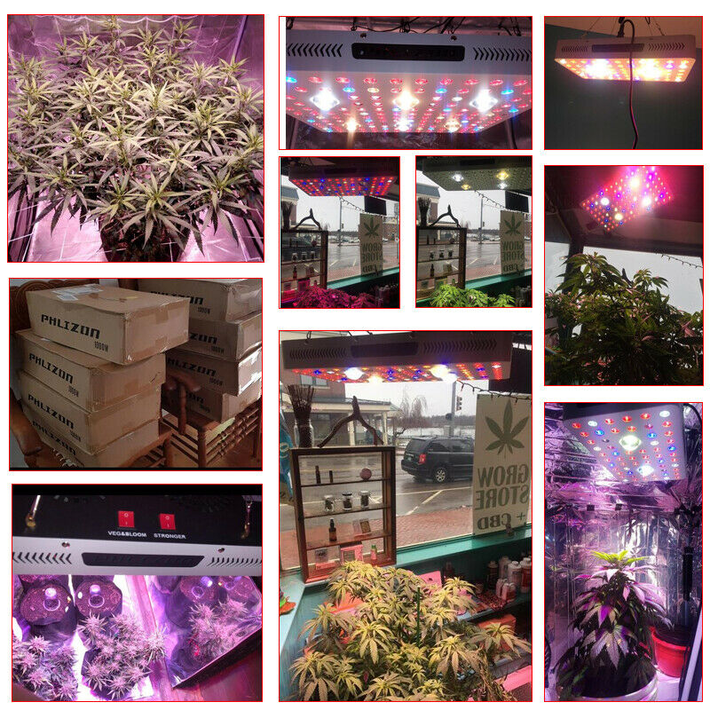 3000w Cob Led Grow Light Use