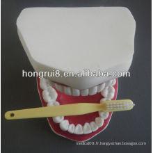 Modèle de soins dentaires médicaux de style nouveau, soins dentaires