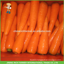 2016 New Crop Chinese Fresh Carrot Lowest Price