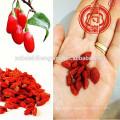 Fructus Lycii,Lycii, Ningxia Goji berries Wolfberries Dried Goji health benefits Chinese Wolfberry Gojihome Goji berry Dried