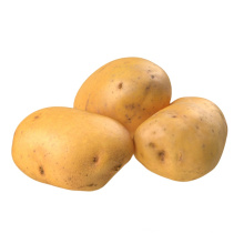 2021 New Harvest Export Natural Hot Selling Good Chinese Fresh Potato
