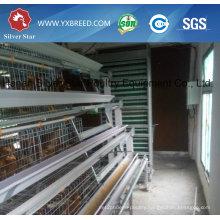 15000 Farm Scale Poultry Birds Cage in Zambia Farm