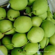 New Season Verde Pera Shandong