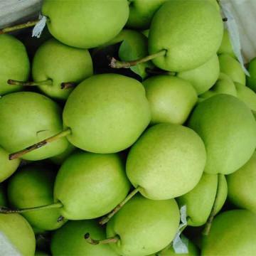 Neue Saison grüne Shandong Birne
