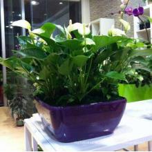 (BC-F1037) Fashionable Design Plastic Self-Watering Flower Pot
