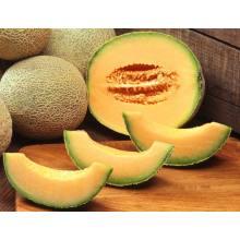 Fresh Premium Melon XinJiang