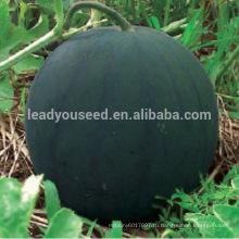W08 средне-ранней зрелости Мидоуне семена бессемянного арбуза, национальный одобрил выбор