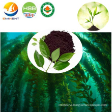 Seaweed Microbial Fertilizer with high NPK from Plant Extract
