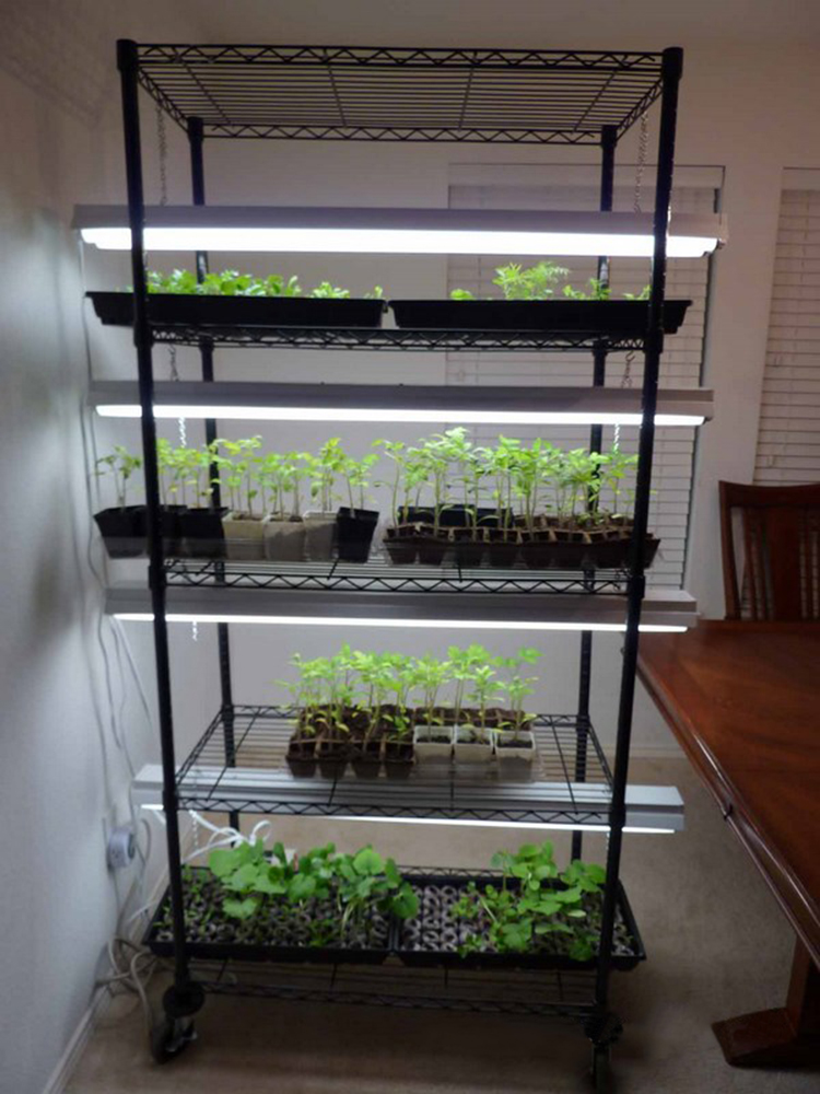 Indoor Microgreen