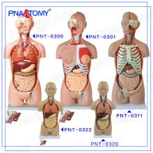 PNT-0322cc Plastic Human Torso body Anatomical model