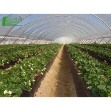 Película plástica de protección contra los rayos UV biodegradación de la biodegradación de la película agrícola