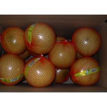 Neue Ernte Frischer Honig Pomelo EU-Qualität