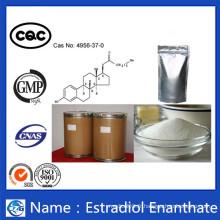 Haute pureté et bon effet Poudre Enjolive d'estradiol