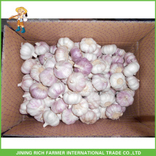 Top Quality Fresh Normal White Garlic 5.5CM 10KG Carton Good Price For Brazil