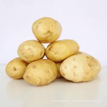 2017 nouvelle récolte de patate douce frais de gros prix