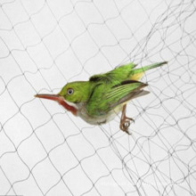 Agricultural PP Bird Net for Protection of Plants