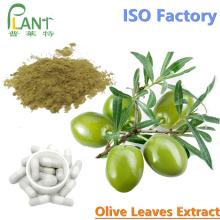 beneficios extrait extrait de feuille d'olivier poudre oleuropéine 20%