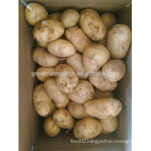 potato harvest fresh potato seed